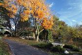 秋の経路 — ストック写真