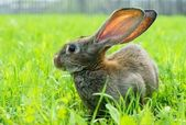 Rabbit in the meadow — Stock Photo