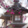 Japanese Lantern and sakura - Stock Photo