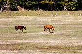 Horses grazing. — Стоковое фото