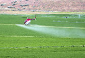 Crop dusting by helicopter. — Stockfoto