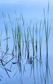 Reflection of grass in water. — Stock Photo