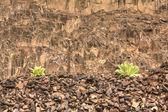 Plantas junto ao muro de pedra. — Foto Stock