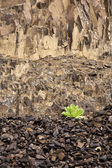 Small green plant, large rock wall. — Stock Photo
