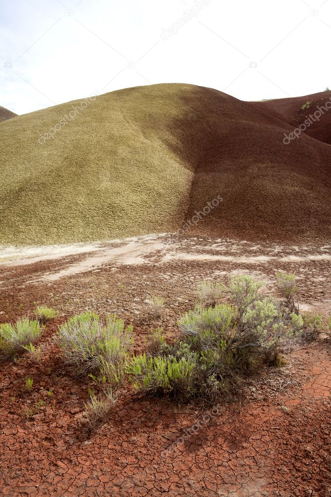 The yellow color of the Painted Hills in north central Oregon. — Stock Photo #5831335