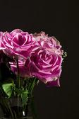 Roses against black. — Stock Photo