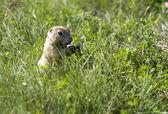 Feeding on blades of grass. — Stock Photo