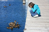 Girl and ducks look at each other. — Stock Photo