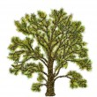 Tree illustration — Stock Photo #5747630