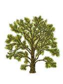 Tree illustration — Stockfoto