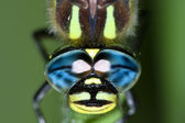 Dragonfly eyes — Stock Photo