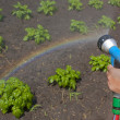 Watering crops with a rainbow — Stock Photo #5680490