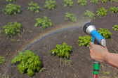 Watering crops with a rainbow — Stock Photo