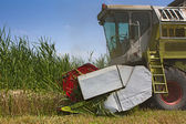 Combined Harvester collecting wheat or barley — Stock Photo