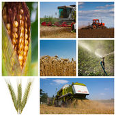 Agriculture montage — Stock Photo