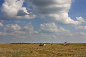 农业研究大天空 — 图库照片