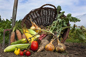 Bountiful harvest — Stock Photo