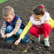 Two little children planting seeds in the field — Stock Photo #5983480