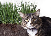 Spring grass and cat — Stock Photo
