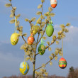 Easter eggs on spring willow tree - Stok fotoraf