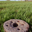 Stock Photo: Old millstone on winter crop spring field