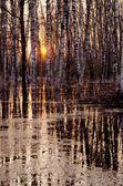 Jarní večer při západu slunce v lese — Stock fotografie