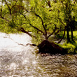 Stock Photo: Evening light on riverside tree
