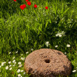 Stock Photo: Old millstone in garden and flowers