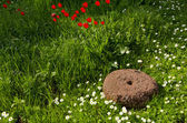 Old millstone in the garden and flowers — Stock Photo