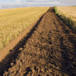 Stock Photo: First tillage trench in crop field