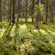 Stock Photo: Sunlight in summer forest