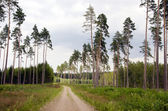 Summer road in the forest — Stok fotoğraf