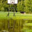 Basketball place, backboard and cow — Stock Photo #6482802