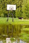 Vaca, maca e lugar de basquete — Foto Stock
