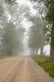 砂利道の木と霧 — ストック写真