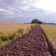 Stock Photo: Summer end tillage trench in crop field