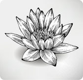 White water lily hand drawing — Stock Vector