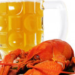 Red crayfish and mug of beer. — Stockfoto