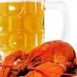 Red crayfish and mug of beer. — Lizenzfreies Foto