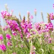 View sky through green grass with pink flowers — Stock Photo #5754874
