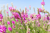 View the sky through the green grass with pink flowers — Stock Photo