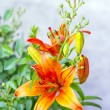 Orange lilies blooming on a bed of flowers — Stock Photo