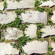 Stone pavement with grass sprouted between the stones — Stock Photo