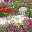 Stock Photo: Flower beds