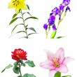 Set of four different flowers — Stock Photo