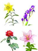 Conjunto de cuatro diferentes flores — Foto de Stock