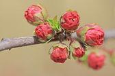 бутон цветка hitom — Стоковое фото