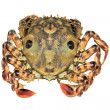 Royalty-Free Stock Photo: Closeup of Crab on white background