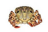 Closeup of Crab — Stock Photo