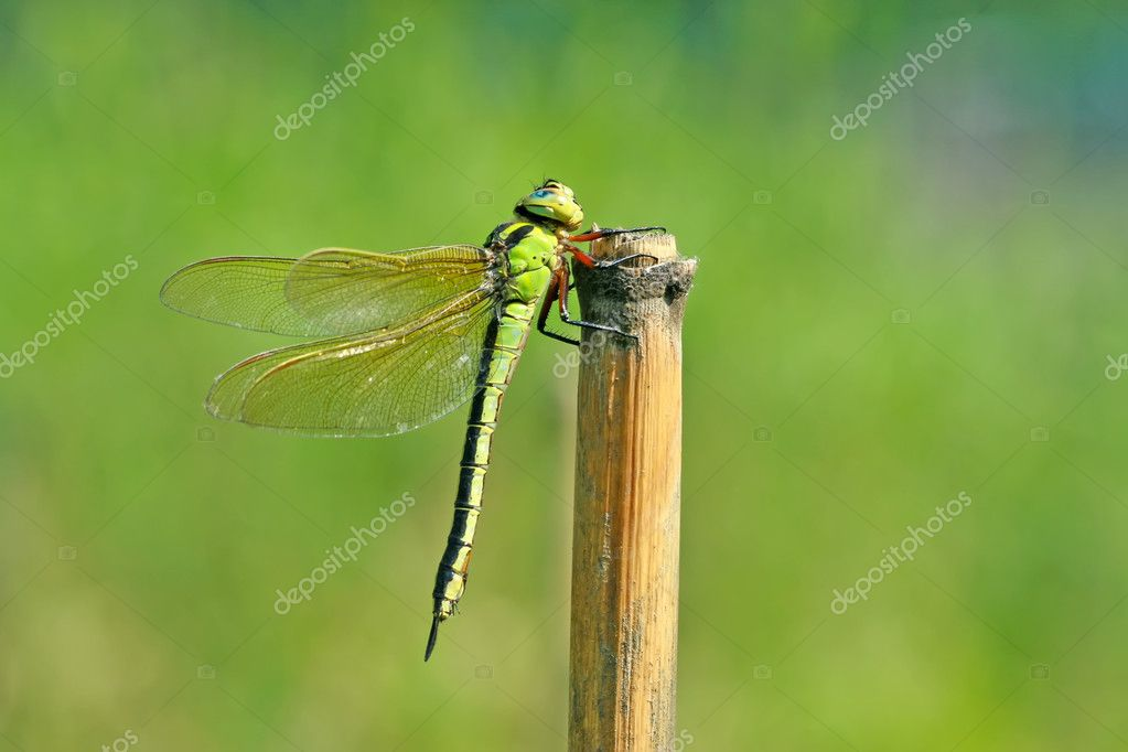 Close up of dragonfly, take photos in the natural wild state, China. — Stock Photo #6144722